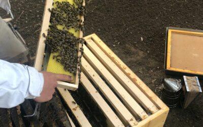 Die Bienen sind los – die Mülheimer Seniorendienste erhalten Zuwachs von rund 40.000 fleißigen Bienchen